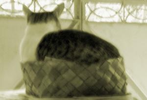 mouser-img_3658-crop.jpg